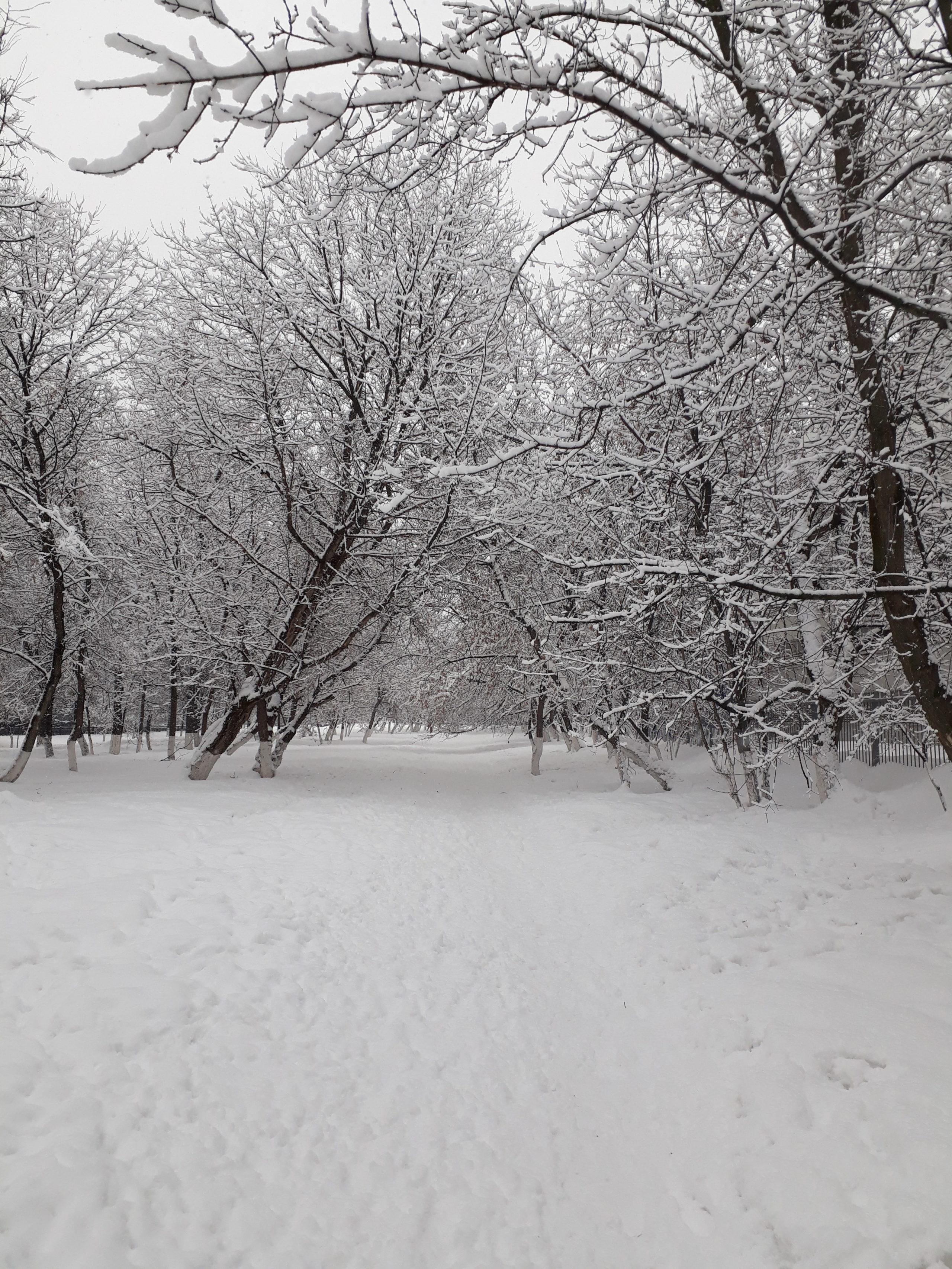 Зимний пейзаж, феврарль 2019